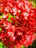 Beautiful red flower macro background wallpaper fine art prints royalty free stock image