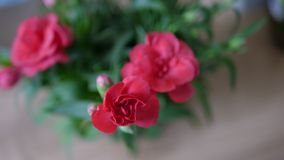 Closeup red flower with blurry background 4. Beautiful red flower with natural light Stock Photography