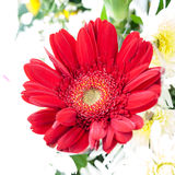 Beautiful red flower with petal Stock Photos