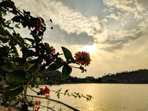 Flower and sun. Beautiful red flower with sun and lake royalty free stock photography