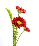 Beautiful red flower . Stock Photography