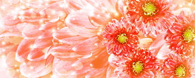 Beautiful red flowers background Stock Image
