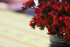 Red flowers in the pot. Stock Photos