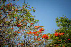 Beautiful red flowers with blue sky Royalty Free Stock Images