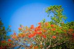 Beautiful red flowers with blue sky Stock Image