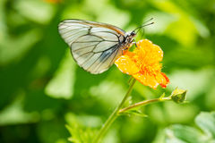 Beautiful red flowers and butterfly Stock Image