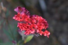 Beautiful red Flowers stock photo