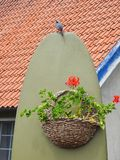 Red flowers in wicker. Beautiful red flowers hanging in wicker and wagtail bird near home, Lithuania Stock Photography