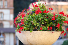 Beautiful red flowers. A large pot with beautiful red flowers, Spain stock photo