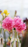 Beautiful red flowers peonies Stock Photography