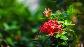 Beautiful red flowers swaying in the breeze Summer vacation concept. stock footage