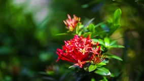 Beautiful red flowers swaying in the breeze Summer vacation concept. stock video footage