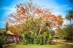 Beautiful red flowers on tree Stock Photos