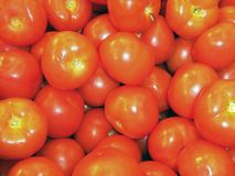 beautiful red fresh tomatoes, close up, agriculture environmentally friendly, it is useful royalty free stock photography