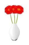 Beautiful red gerbera daisy flowers in vase isolated Stock Photography