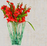 Beautiful Red Gladiolus Flower Vase Stock Images