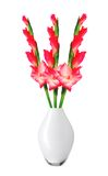 Beautiful red gladiolus in vase isolated Stock Images