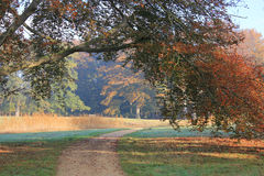 Beautiful red golden autumn trees hanging over walking path. Stock Images