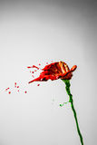Beautiful red and green paint made orchid flower Stock Image