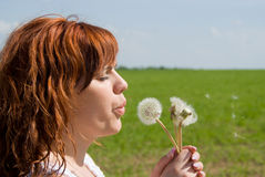 A beautiful red-haired blow away dandelion Stock Images