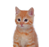 Beautiful red-haired kitten Stock Photos