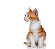 Beautiful red-haired kitten Stock Photo