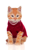 Beautiful red-haired kitten wearing a wool sweater Stock Photo