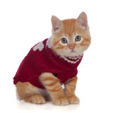 Beautiful red-haired kitten wearing a wool sweater Royalty Free Stock Photography