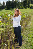Beautiful red-haired overweight woman on a sunflower field. Royalty Free Stock Image