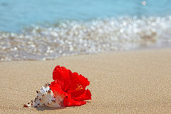 Beautiful red hibiscus flower on the beach Royalty Free Stock Photo
