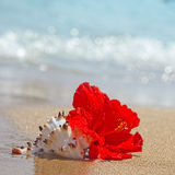 Beautiful red hibiscus flower on the beach Royalty Free Stock Image