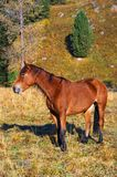 Beautiful red horse. royalty free stock photo