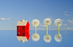 House model on mirror and dandelion seeds blowball Royalty Free Stock Photo