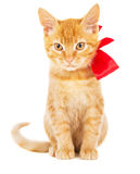 Beautiful red kitten with ribbon Royalty Free Stock Image