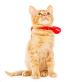 Beautiful red kitten with ribbon Stock Photos