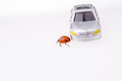 Beautiful red ladybug walking on a model car Royalty Free Stock Photography