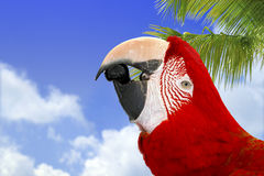 Curious Macaw. Beautiful Red Macaw on the Sky Background Stock Photo