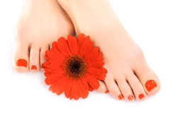 Beautiful red manicured nails with gerbera Royalty Free Stock Photos