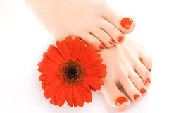 Beautiful red manicured nails with gerbera Royalty Free Stock Photography