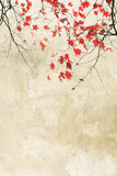 Beautiful red maple grungy background Royalty Free Stock Photography