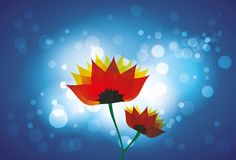 Beautiful red orange daisy flowers blue backdrop Stock Images