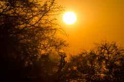 Beautiful red orange sunrise over silhouette of thorny trees with spider webs in Etosha National Park, Namibia, Africa. Beautiful red orange sunrise over stock image