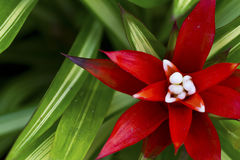 Beautiful Red Orchid Stock Photo
