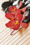 Beautiful red orchid on bamboo mat Stock Photos