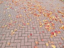 Red walking path and autumn leaves Stock Images