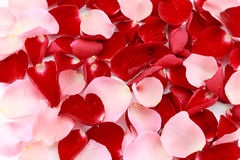 Beautiful red and pink rose petals Stock Photography
