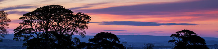 Beautiful red and pink sunset with tree silhouettes - panorama. Royalty Free Stock Image