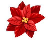 Beautiful red Poinsettia flower Christmas decoration christmas ornament  illustration isolated on white background Stock Images