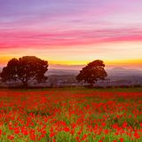 Beautiful red poppies field landscape with colorful sunset sky stock photography
