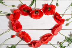 Beautiful red poppies in shape of heart Royalty Free Stock Photography